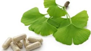 Ginkgo Biloba Nedir, Faydaları Nelerdir?