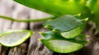 Aloe Vera Faydası Nedir, Nasıl Kullanılır, Yenir mi?