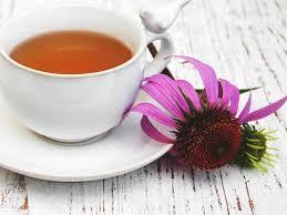 ekinezya çayının faydaları nelerdir