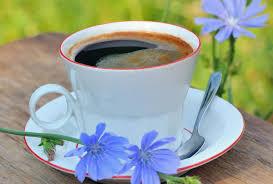 hindiba kahvesi faydaları