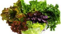 K Vitamini Nelerde Var? K Vitamini İçeren Besinler