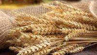 Buğday Kepeğinin  Fayda ve Zararları Nelerdir?
