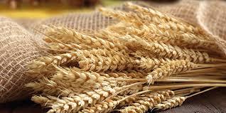 buğday kepeği neye iyi gelir