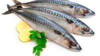 Uskumru Balığı Fayda ve Zararları