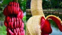 Kırmızı Muz Nedir? Faydaları ve Sarı Muzdan Farkı