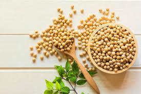 soya fasulyesi protein oranı