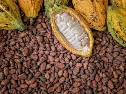 kakao çekirdeği faydaları