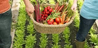 beta karoten hangi besinlerde bulunur