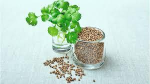 kişniş bitkisinin faydaları