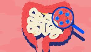 bifidobakteriler nelerdir