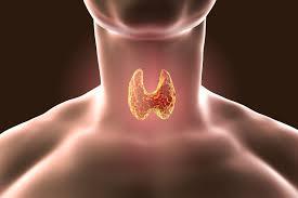 tiroid belirtileri nelerdir