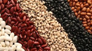 baklagiller protein oranı